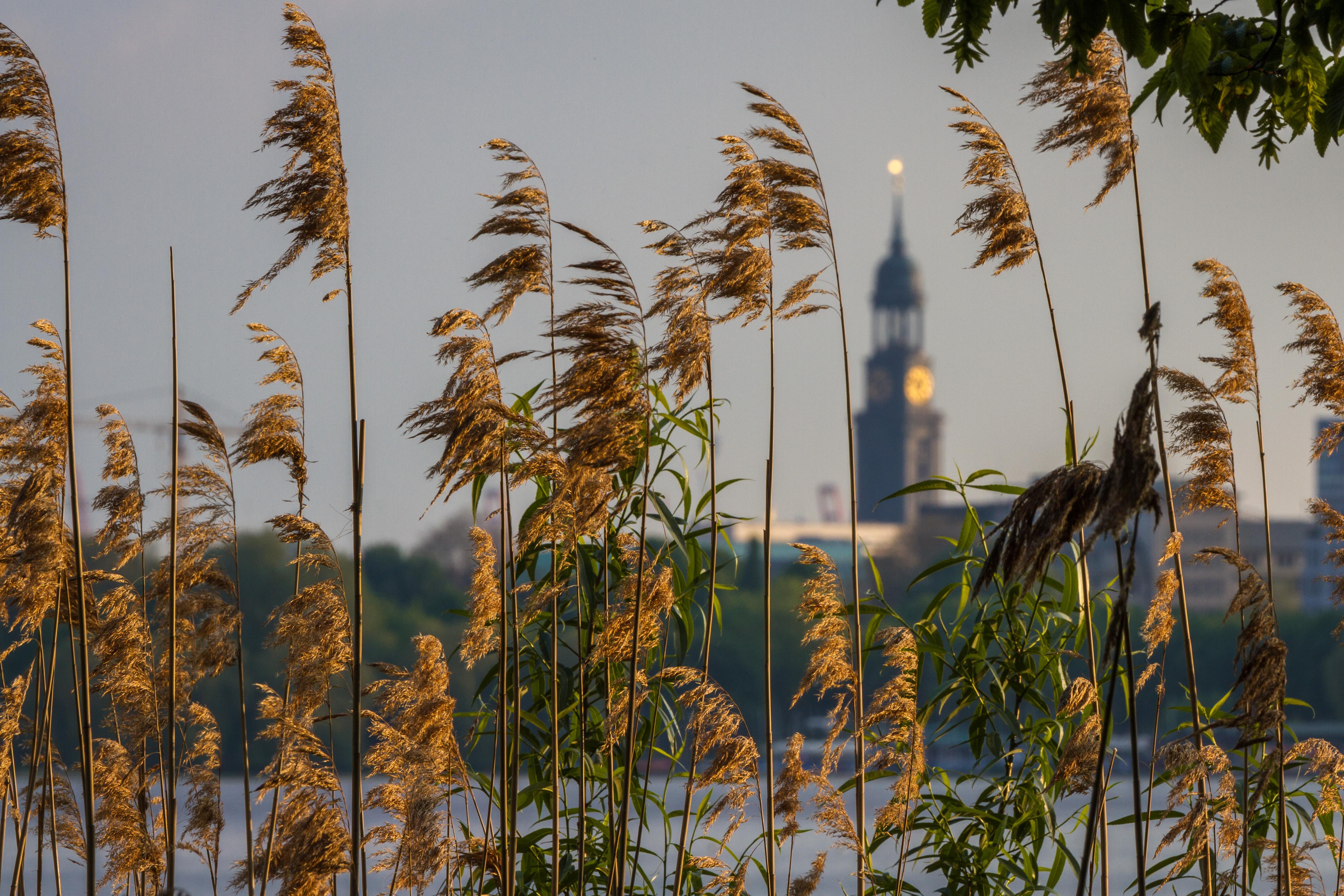 Hamburg, Michel