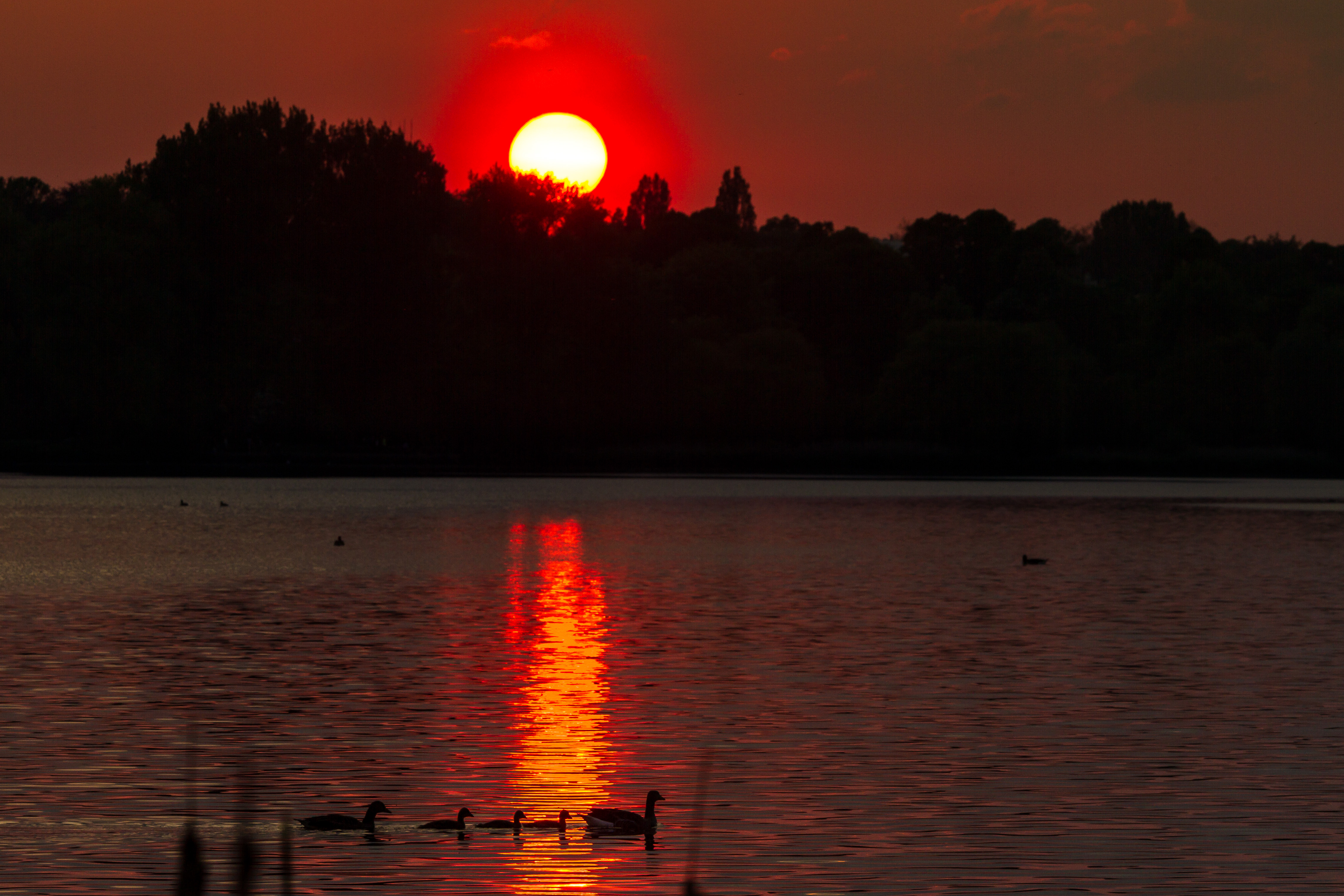 Alster, Sunset in red